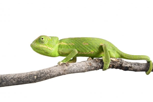 What No One Tells You About Chameleon Marketing